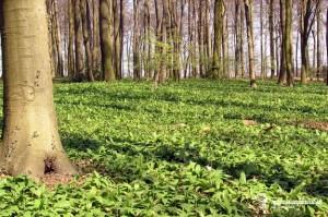 Zelená závislosť